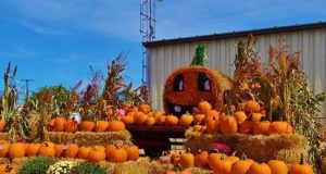 Fall Harvest Festivals USA