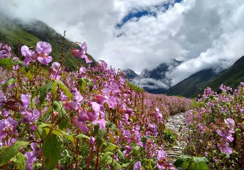 Valley of Flowers, Uttarakhand: